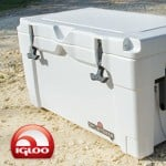Best Igloo Cooler For Sale – Reviews & Where To Buy Tips