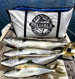 There Are A Of Diffe Reasons Why Some People Prefer Insulated Fish Bags Over Traditional Coolers