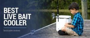 best live bait cooler 2020